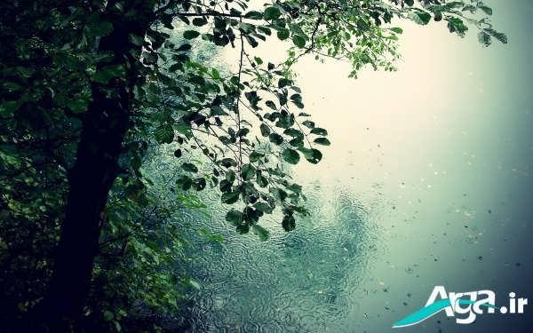 طبیعت و باران