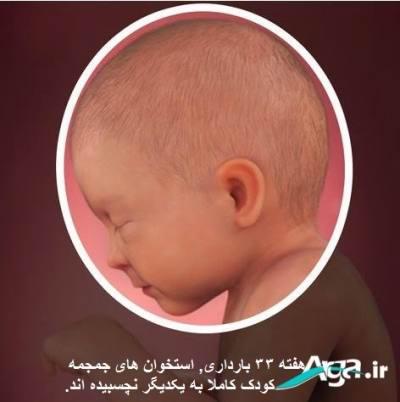 تغییرات جنین در بارداری