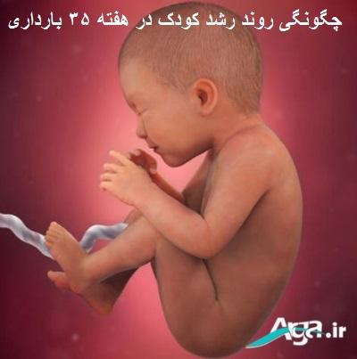 هفته 35 بارداری