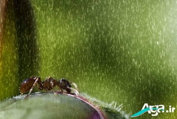 حشرات و باران
