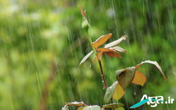 منظره بارانی