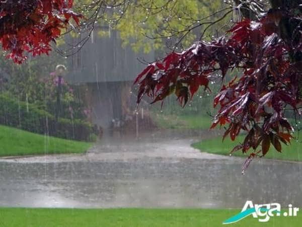 عکس منظره بارانی