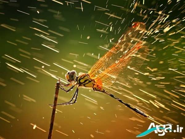 عکس زیبا از مناظر بارانی و حشرات