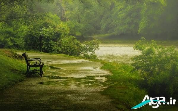طبیعت زیر باران