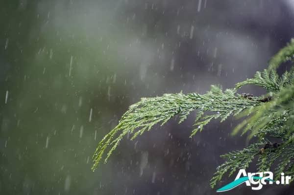 عکس باران