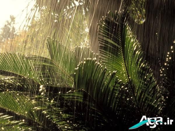 تصاویر بارانی