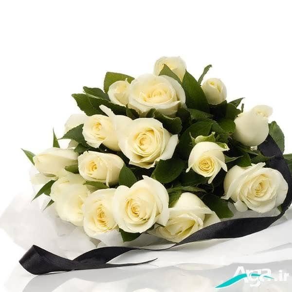 گل رز سفید زیبا