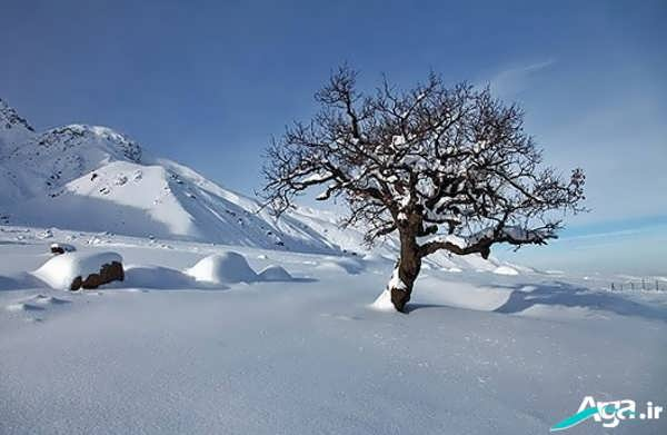 مناظر طبیعی زمستانی