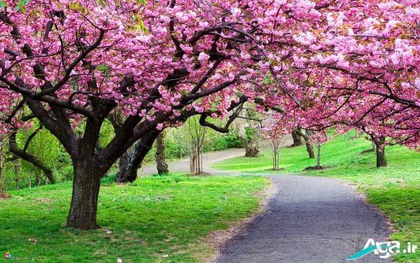 طبیعت بکر در بهار