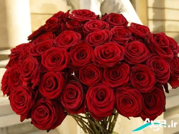 دسته گل های رز