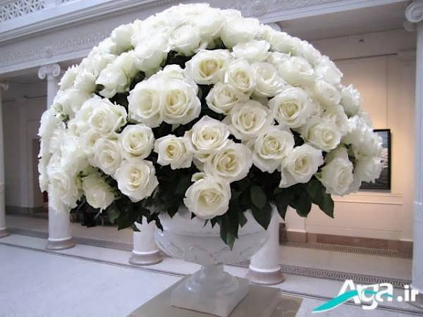 دسته گل رز سفید روز عشق