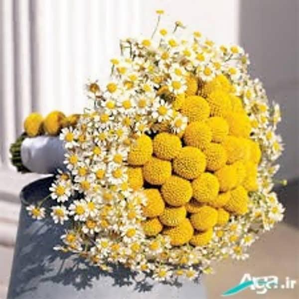 دسته گلی بسیار زیبا بابونه
