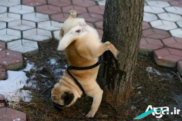 عکس جالب از سگ