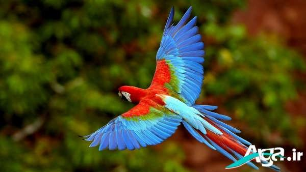 عکس طوطی زیبا