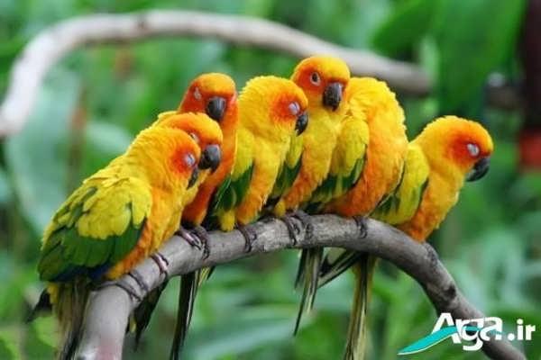تصویری از چند طوطی