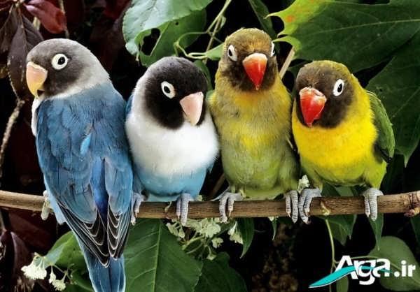 طوطی های مختلف