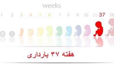 هفته 37 بارداری