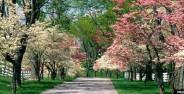 طبیعت زیبای بهار