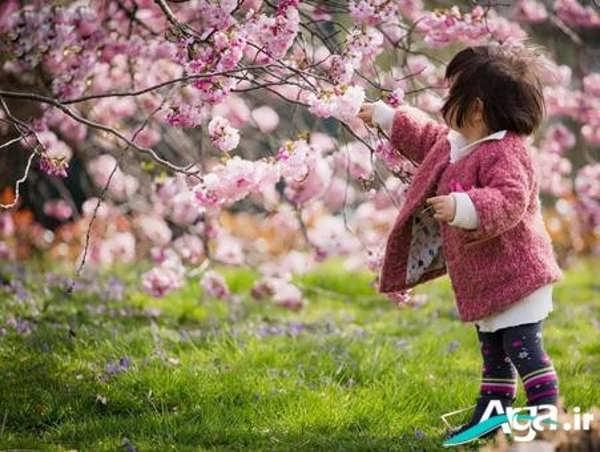 رنگ سال اروپا عکس طبیعت بهاری و شکوفه های بهاری درختان