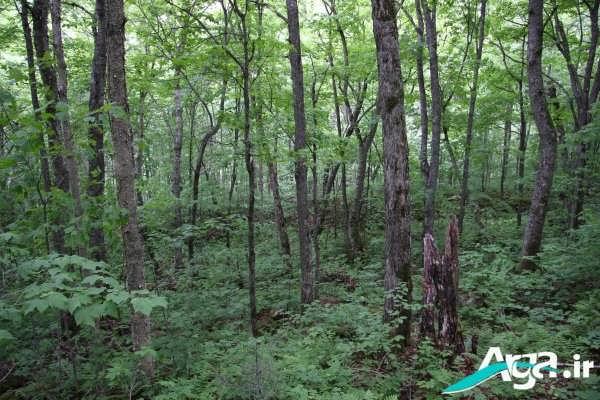 عکس طبیعت جنگل