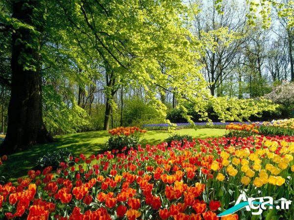 عکس گل های زیبا در بهار