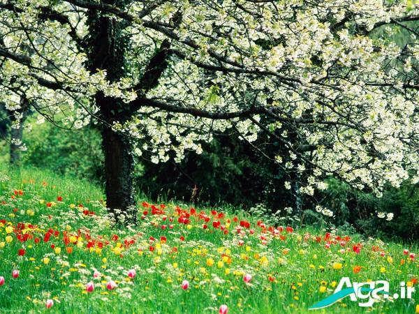 عکس های طبیعت بهاری