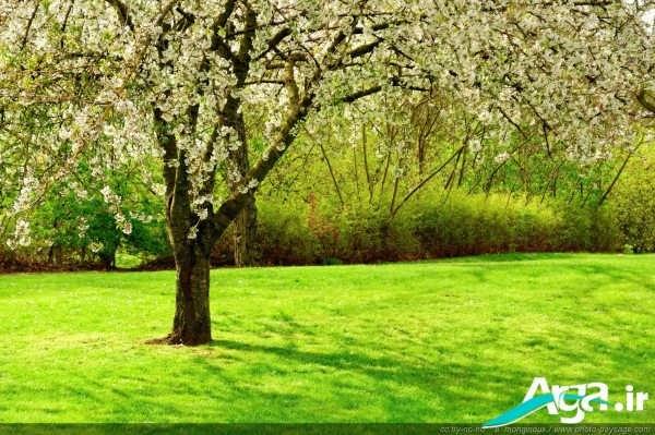 عکس طبیعت سبز بهاری