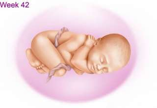 هفته 42 بارداری