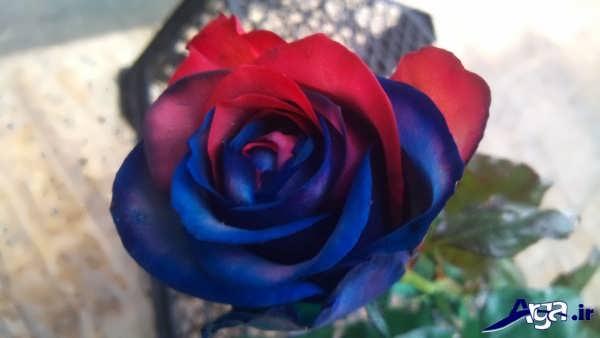 عکس گل آبی