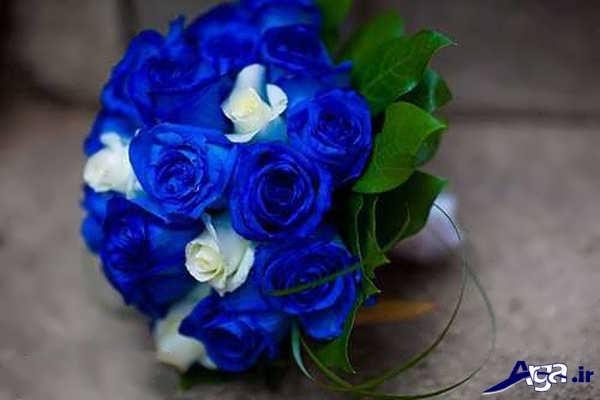 گل رز آّبی