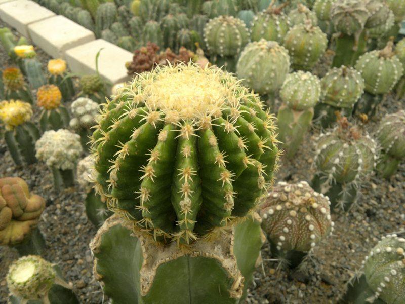 عکس گل طبیعت