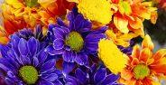 تصاویر گل های زیبای جهان