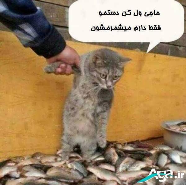 عکس از گربه شیطون
