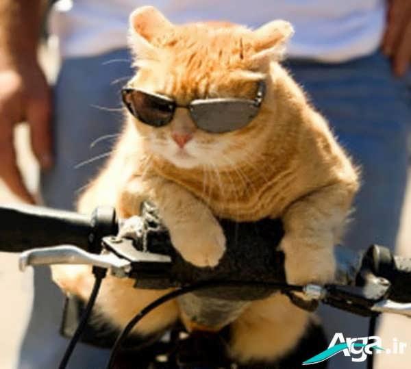 عکس های گربه شیطون