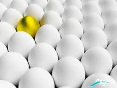 بررسی خاصیت های تخم مرغ