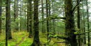عکس جنگل