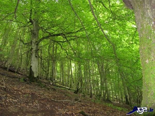 عکس جنگلهای ایران