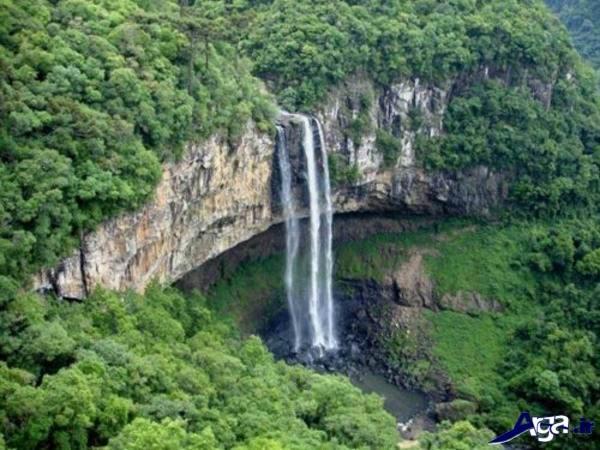 تصاویر جنگل آمازون