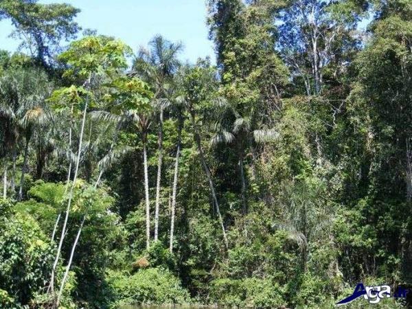 عکس درختان جنگل