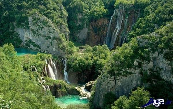 عکس جنگل زیبا
