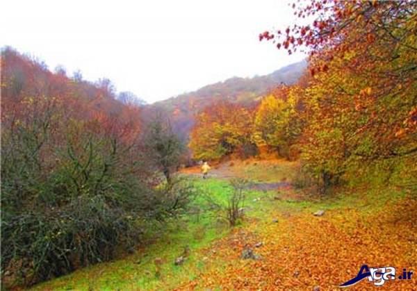 تصاویر جنگل
