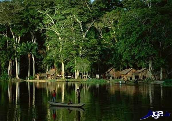 عکس جنگل زیبا و دیدنی