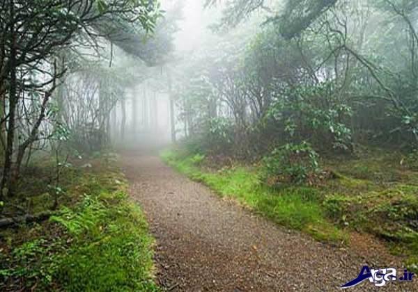 عکس های جنگل سرسبز