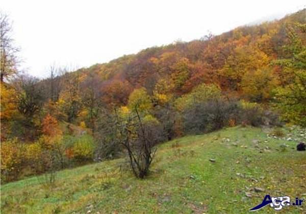 عکس زیبای جنگل شمال