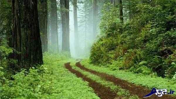 عکس دیدنی جنگل