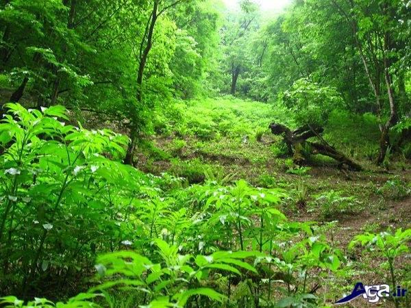 تصاویر جنگل های سرسبز