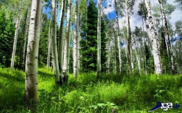 عکس های زیبای جنگل