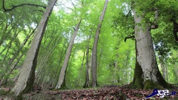 عکس زیبای جنگل