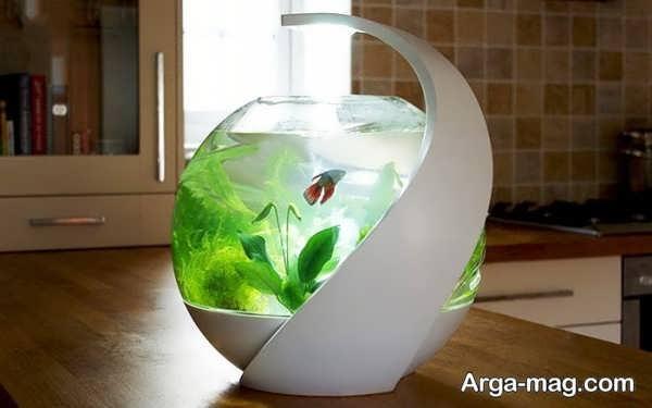 دیزاین زیبای تنگ ماهی
