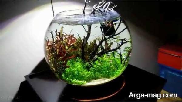 دیزاین مدرن تنگ ماهی
